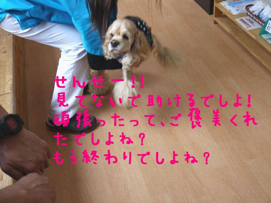 P1030321_2